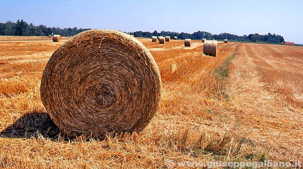 video_aziende_abricole_produzione_galliano