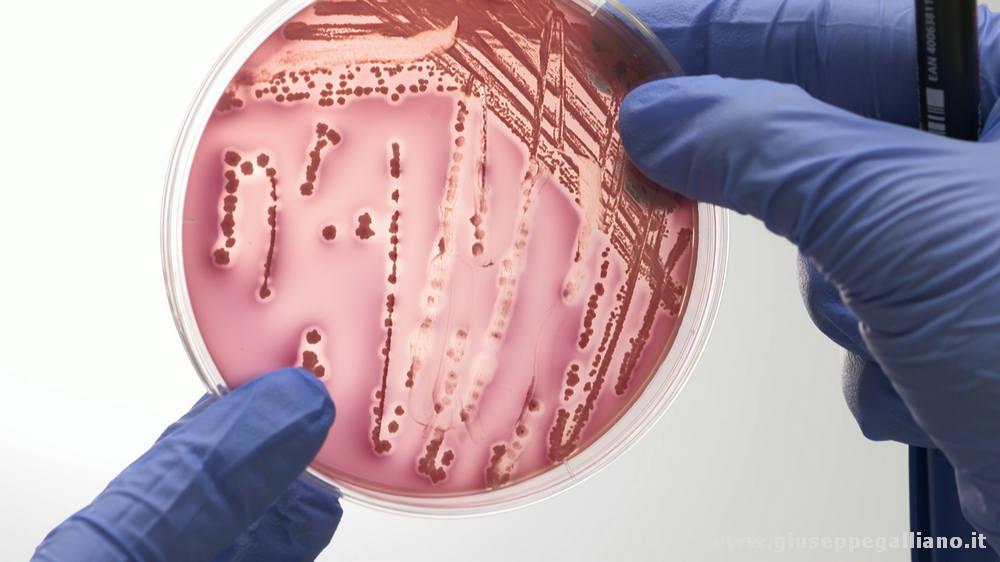 laboratori microbiologia